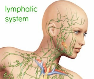 seattle, seattle metro, mld, manual lymphatic drainage, lymph drainage, renton medical massage, renton, massage, renton mld